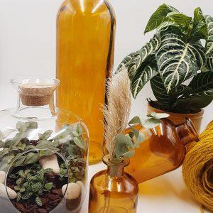 Plante Addict & Terrarium